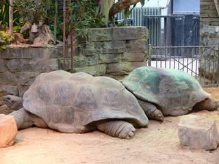 Riesenschildkröten im Artis Zoo © katielips