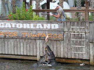 Gatorland in Orlando, Flrorida © Kissimmee - The Heart of Florida